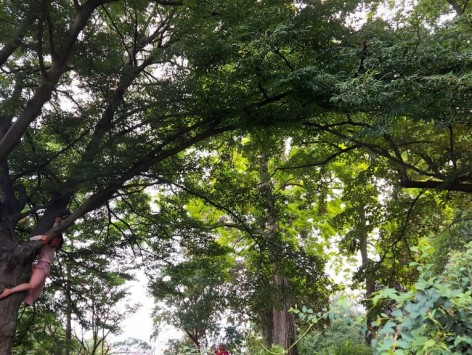 Danse Arbres - L'Arboréographie/ Mami Kitagawa